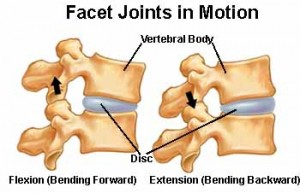 Facet joints control movement