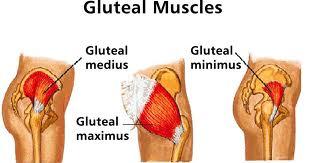 gluteals